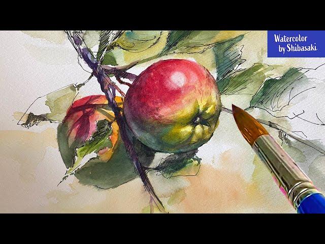 柴崎春通の水彩画  / 枝についた赤い林檎を描く / 癒しの水彩画コレクション