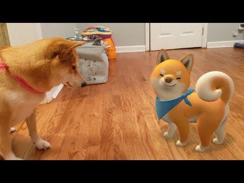 Real Shiba vs. Animated Shiba
