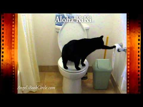 Smart Cat – Uses Toilet  Paper – Funny Kitty –  Aloha KiKi