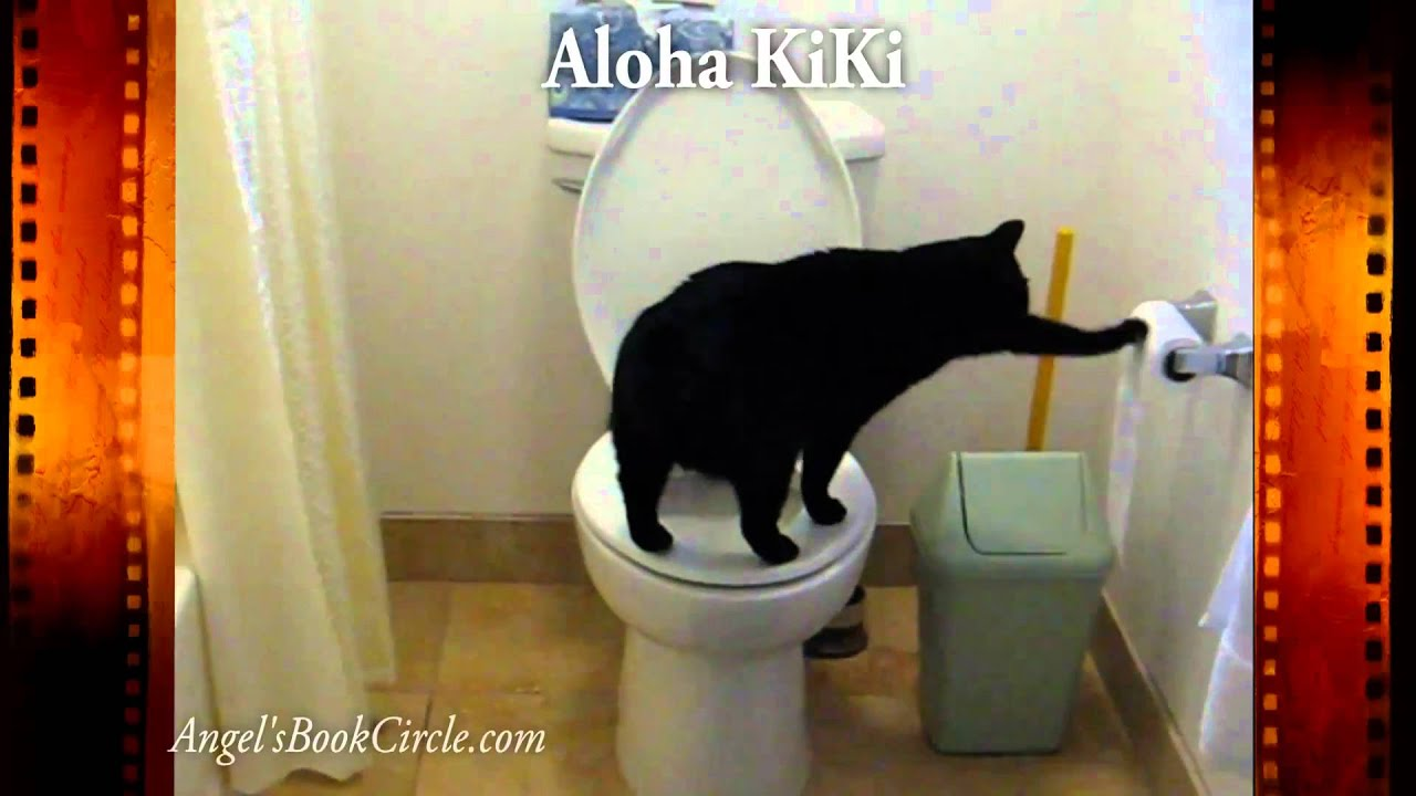 Funny Toilet Paper Smart Cat Uses Toilet Paper Funny Kitty Aloha Kiki