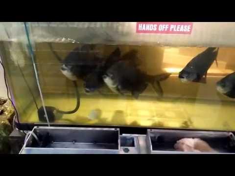 Manila aquarium