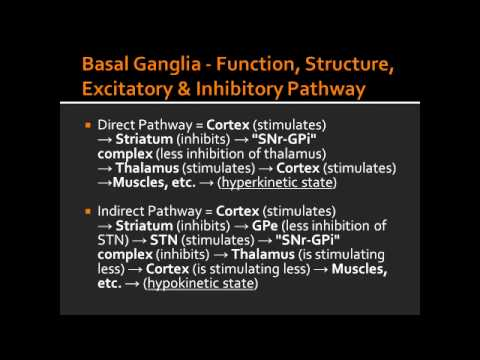 Basal Ganglia - Function, Structure, Excitatory & Inhibitory Pathway