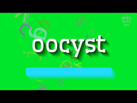 "How to say ""oocyst""! (High Quality Voices)"