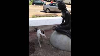 Toto Bull Terrier Vs Siren Statue (sirena Statuie)