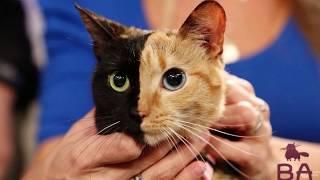 Самые Популярные Кошки, Которые Изменили Мир