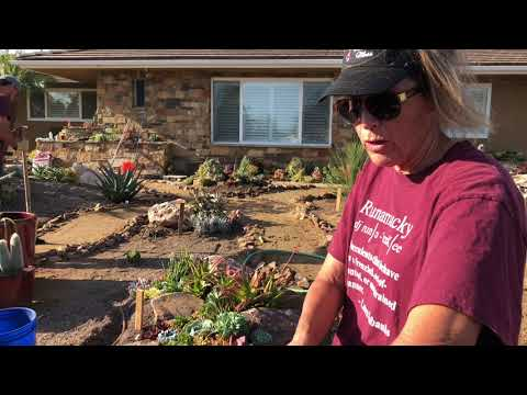 HUGE Succulent Front Yard Installation in Tustin, Ca with Laura Eubanks and Team DFS (Day 4)