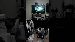 동치미 물김치속의 효모 유산균-JAPAN ARIO AN…