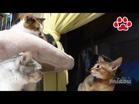 仔猫達、5匹が住む猫部屋に挨拶に行った日【瀬戸のるかめる日記】Kittens went to the cats room.