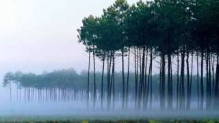 Pesona-saleem Iklim