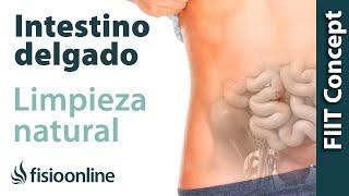 Limpieza de intestino delgado - Desintoxicar el intestino de forma natural