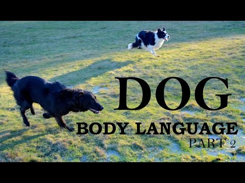 Understanding Dog Body Language - Part 2