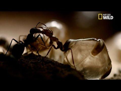 le jour des fourmis epub