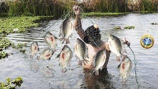 Fisherman caught large lagoon tilapias with net