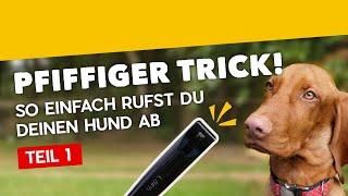 Abruf mit Hundepfeife Teil 1: Wie konditioniere ich meinen Hund auf die Pfeife [Training #18] (2020)
