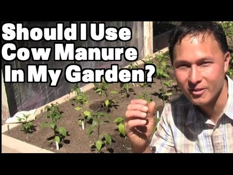 Should I Use Cow Manure in My Vegetable Garden? & More Organic Gardening Q&A