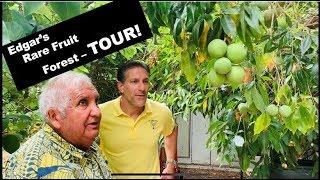 Grow 100+ Rare Fruit Trees | Backyard Orchard |  Urban Food Forest