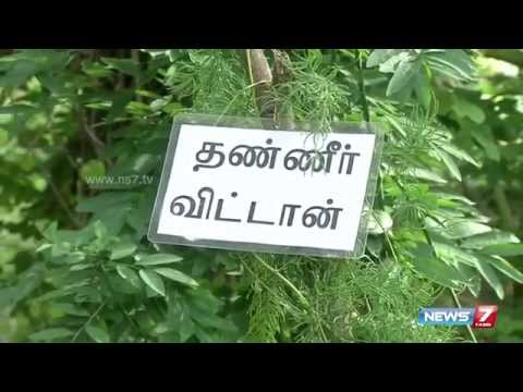 How to grow Thanneervittan(Asparagus racemosus) in your terrace? | Poovali | News7 Tamil