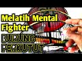 Melatih Mental Fighter Burung Perkutut Supaya Gacor Dan Rajin Bunyi  Mp3 - Mp4 Download