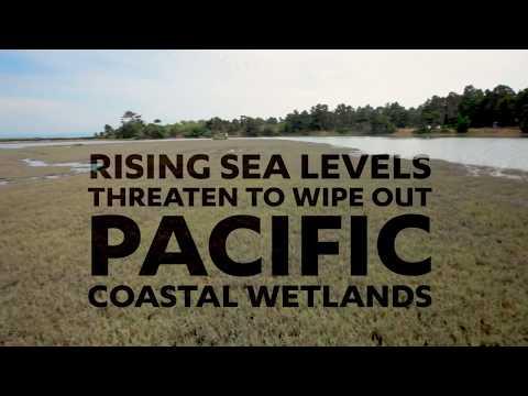 Rising sea levels threaten California's salt marsh