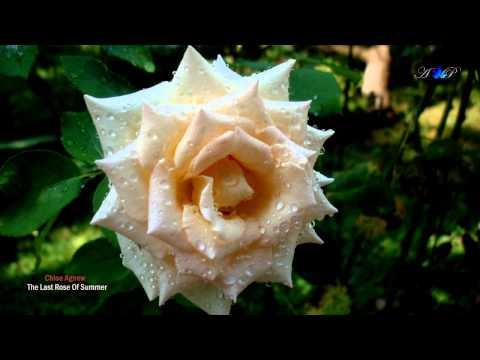 The Last Rose Of Summer - Chloe Agnew (amazing music)