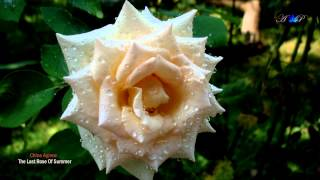 The Last Rose Of Summer - Chloe Agnew (amazing music)