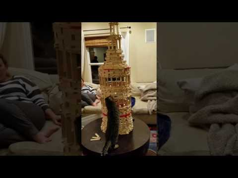 cat-fail – BUSTER the cat plays building inspector…