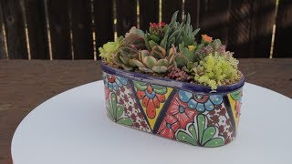 Video Beautiful Succulent Garden In Talavera Pottery download MP3, 3GP, MP4, WEBM, AVI, FLV Juni 2018