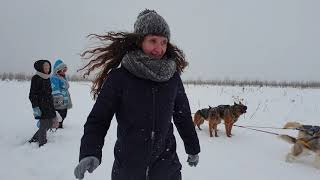Хаски. катание на упряжках в Клан Симурана (Ижевск, Удмуртия)
