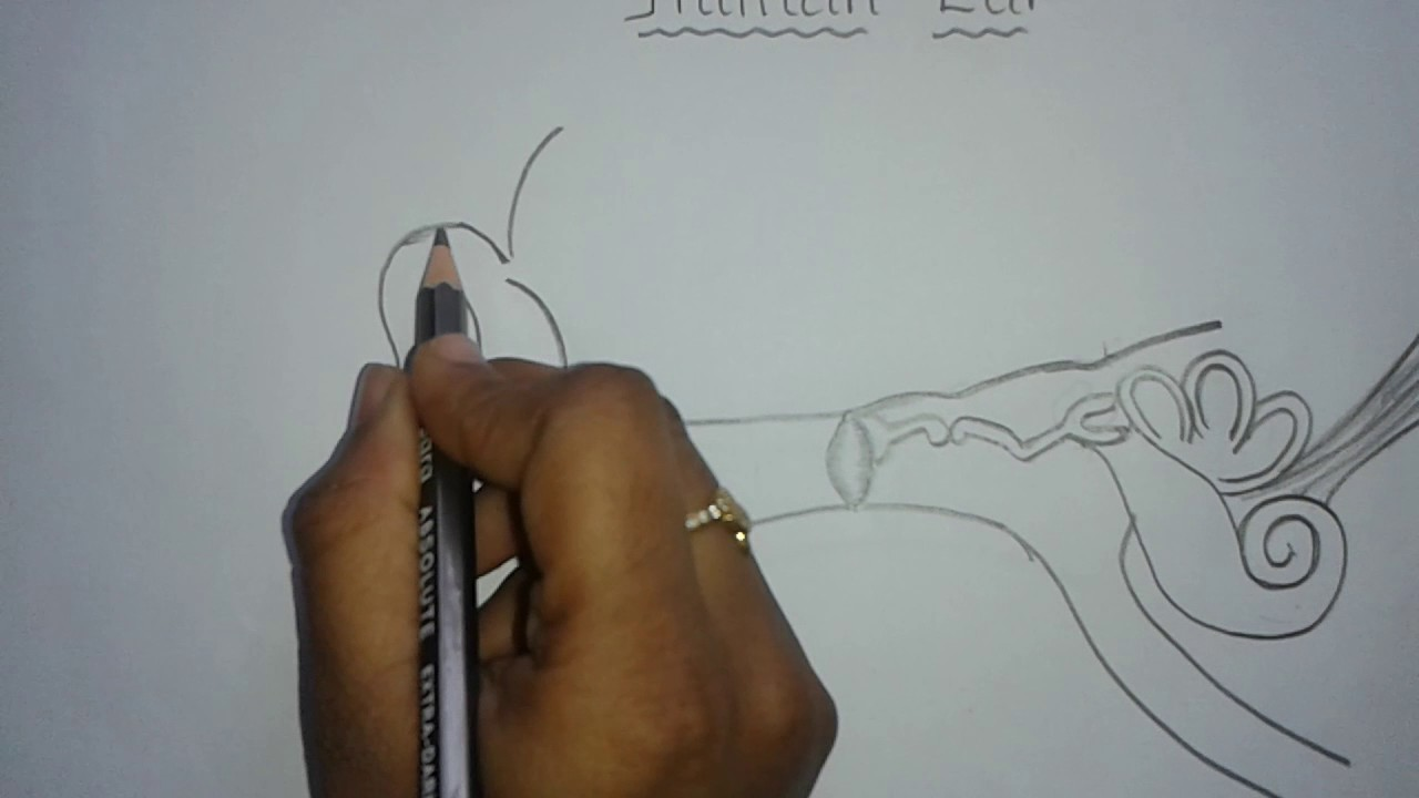 Easy way to draw human ear youtube easy way to draw human ear ccuart Images