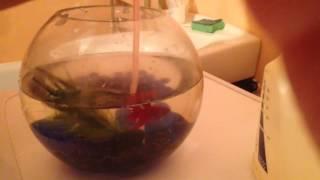 видео Как менять воду в аквариуме с рыбками