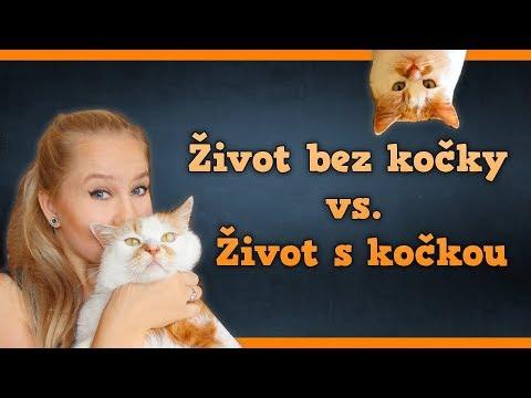 Život s kočkou vs. život bez kočky│Kate Wednesday