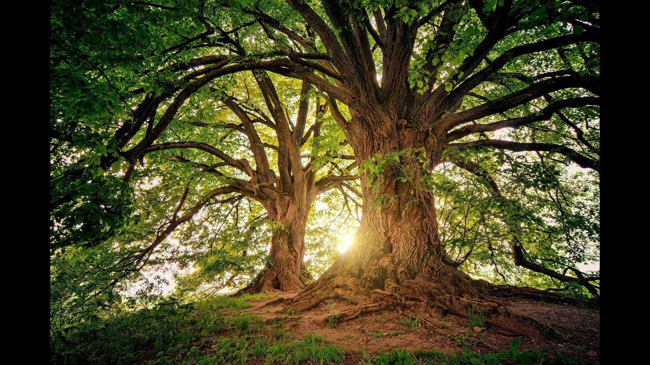 SOIGNEZ VOTRE ARBRE GÉNÉALOGIQUE :De la branche à la racine