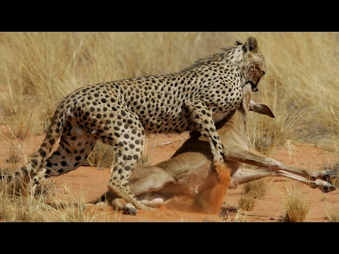 The Most Dangerous Predators On Earth - Wild Animals Documentary HD