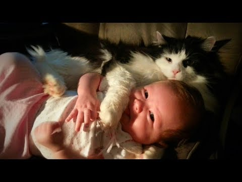 Cats and Babies 🐱👶 Cute Babies Playing with Cats (Part1) [Epic Life]