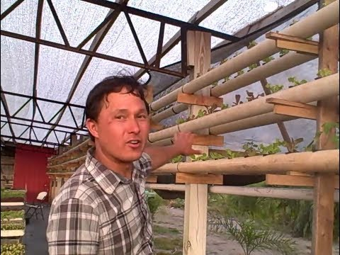 Vertical Hydroponic DIY System uses a Single Nutrient for Am