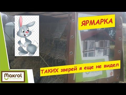 Необычные кролики на птичьем рынке. Кропоткин. 09,2018 Макляк. Макрол.