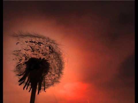 'Toygar Işıklı - Eyşan (Unutamıyorum) Enstrümantal Müzik'