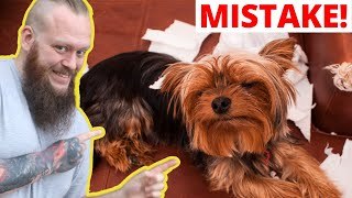 Don't Make This Mistake With Your Puppy