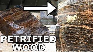 Petrified Wood Cut in Half with a 60 000