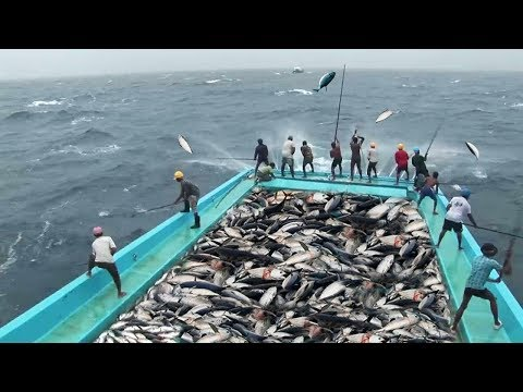 Amazing Fast Tuna Fishing Skill, Too Many Fish! Catching Tuna on The Big Sea