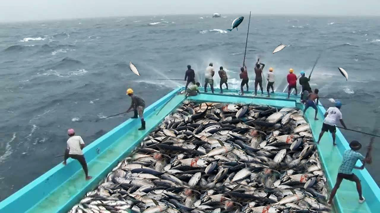 hight resolution of amazing fast tuna fishing skill too many fish catching tuna on the big sea