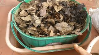 Composting dry leaves