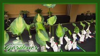 The Future of Hostas | Volunteer Gardener