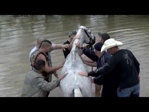 041816 horse rescue