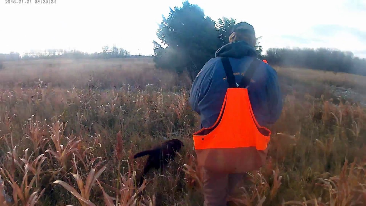 Pheasant Hunting On A Game Farm Part 1 Youtube