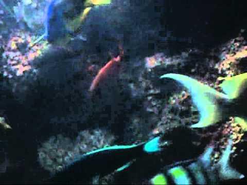 Water World Marine Aquarium Sri Lanka - Kelaniya