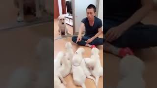 Mother of puppies