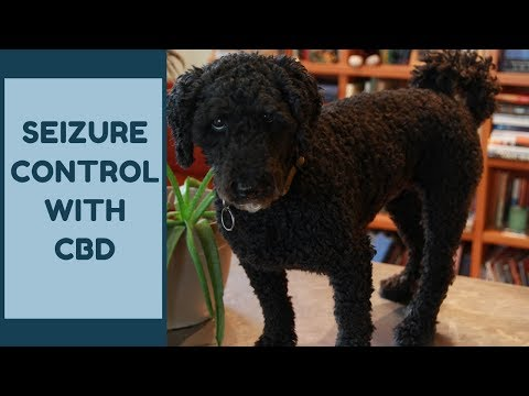 CBD To Control Seizures In Dogs and Cats