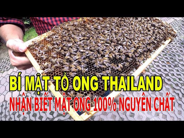 BÍ MẬT TỔ ONG THAILAND NHẬN BIẾT MẬT ONG 100% NGUYÊN CHẤT