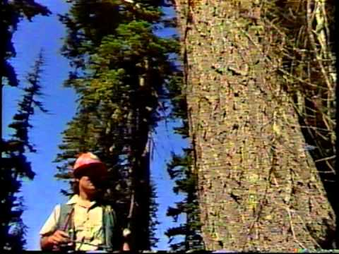 Careers In The Forest Service